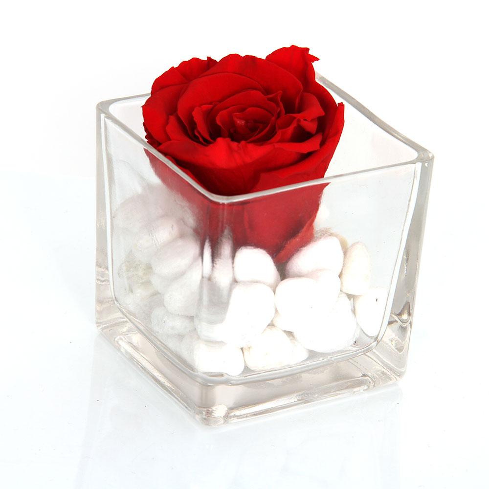Rosas Rojas | Trébol Floristas