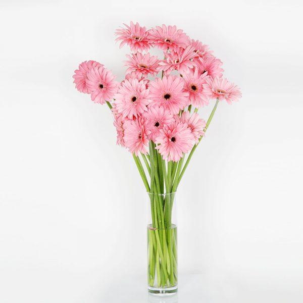 Ramo tonos rosados gerbera | Trébol Floristas