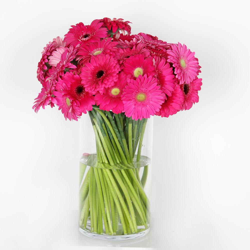 Ramo tonos malva gerbera | Trébol Floristas