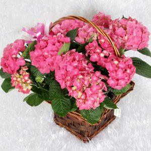 Hortensia | Trébol Floristas