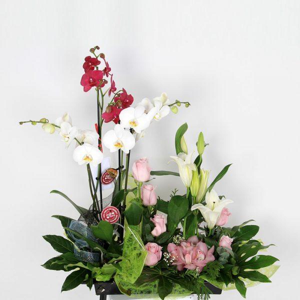 Centro de orquídeas variado | Trébol Floristas