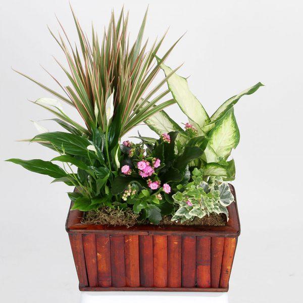Cesta variada plantas | Trébol Floristas